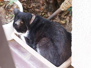 玄関開けると猫